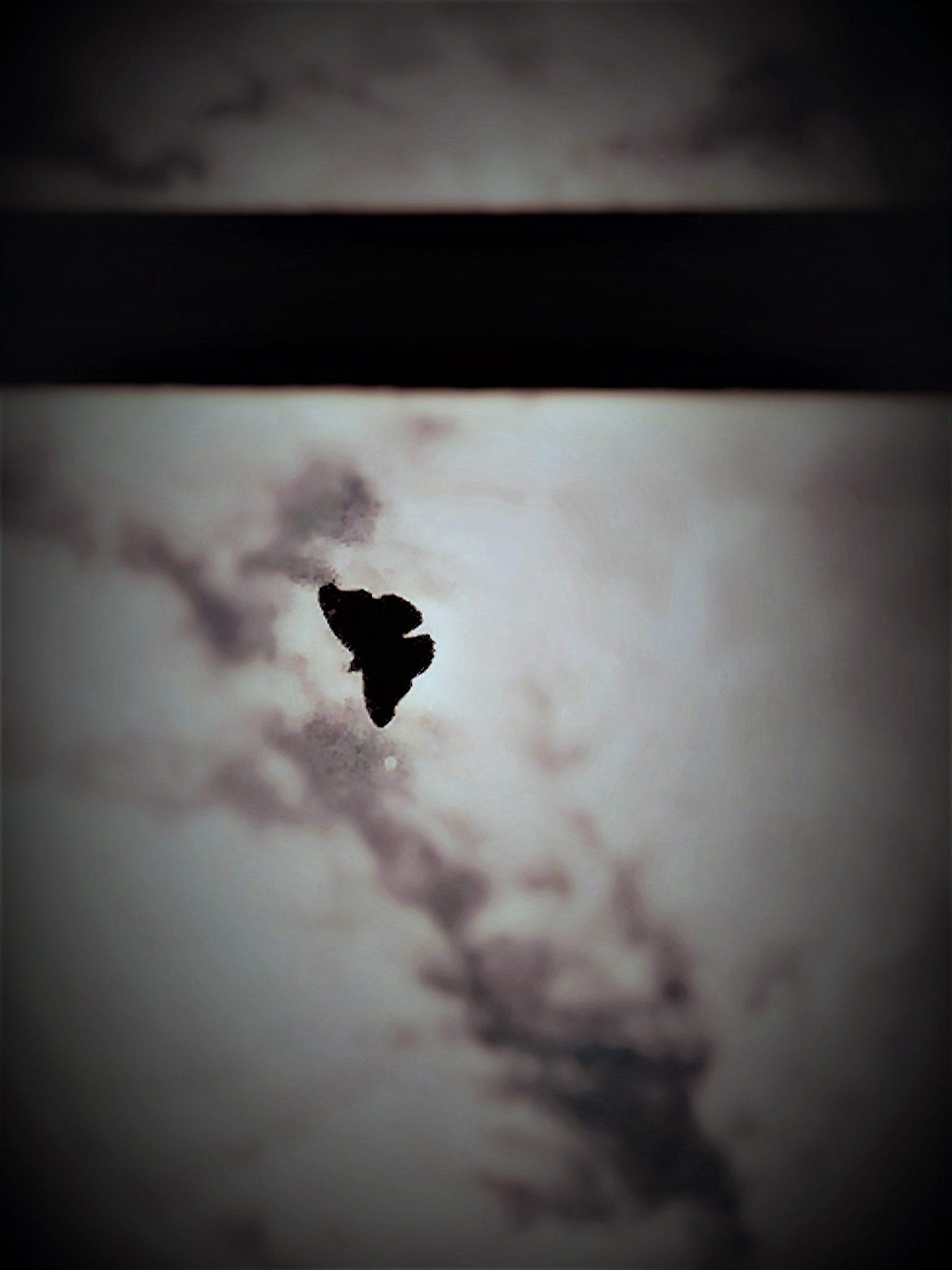 hubertine langemeijer vlinder op het glas